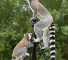 lemur_on_tripod